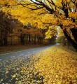 Осеннее нашествие